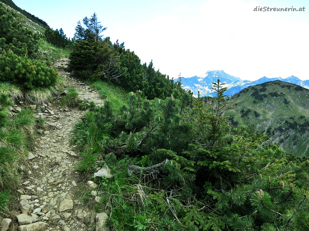 Bschießer, Hinterstein, Zipfelsalpe, Allgäuer Alpen
