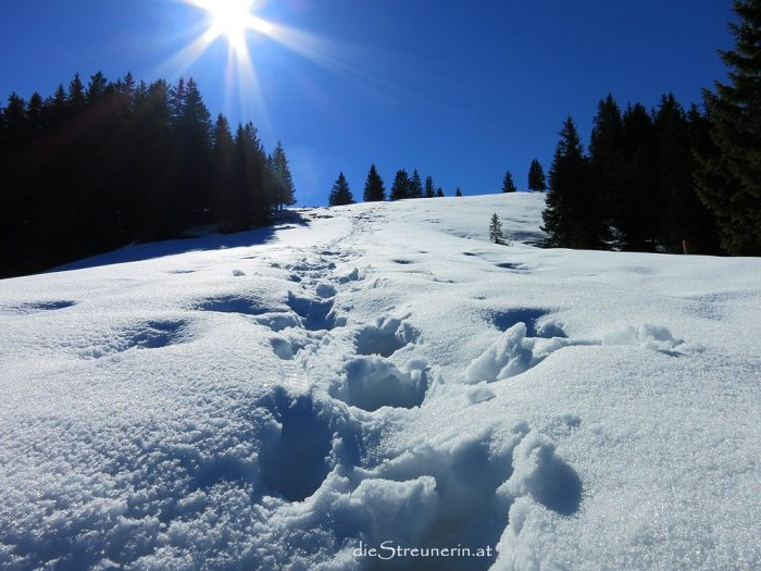 Sonnenköpfe, Wanderung, Sonthofen, Sonnenkopf, Allgäu