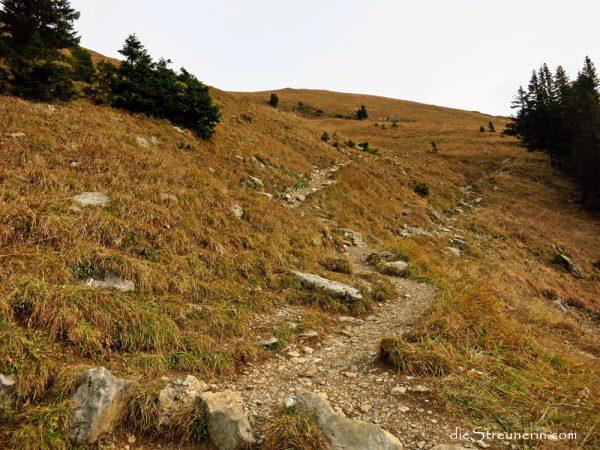 Kanisfluh, Begrenzer Wald