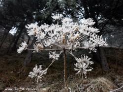 zarter Schneepuder in der Natur