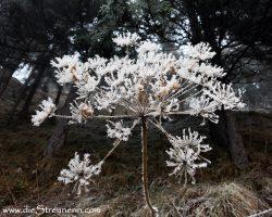 Heute.. zarter Schneepuder in der Natur