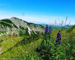 Blau funkelt es am Gaishorn und beim Abstieg entfährt mir ein arrggghhh..