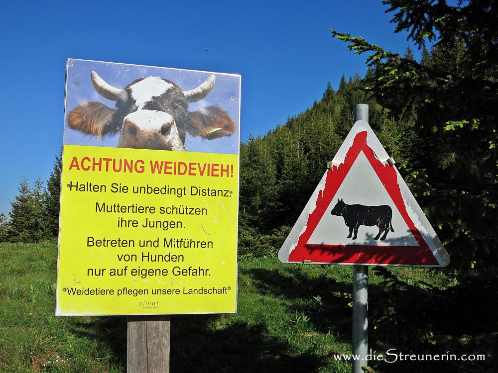 Verhalten Mutter Kuh Herde