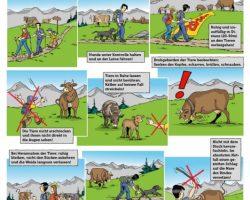 Richtiges Verhalten Mutter-Kuh-Herde