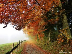 5 Top Herbstwanderungen