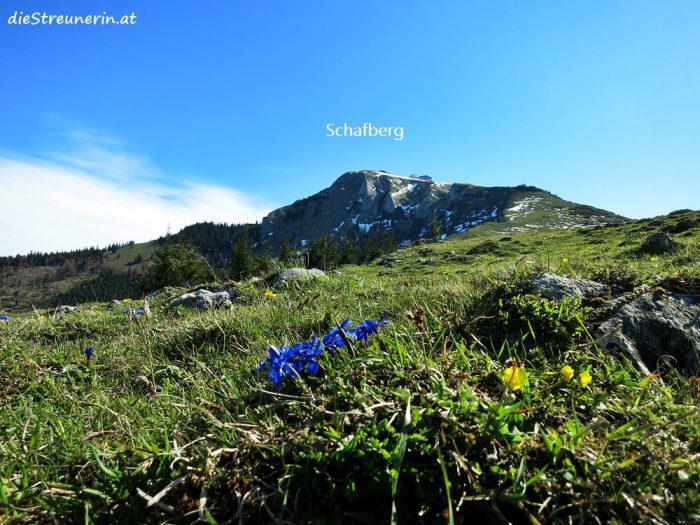Schafberg, Schafbergbahn, Salzkammergut, Wanderung, Spinnerin, Schafbergspitze